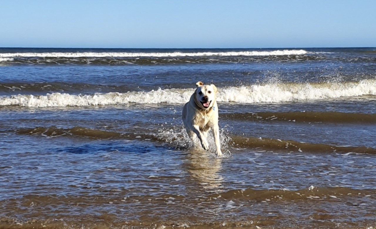 dog friendly holidays north york moors